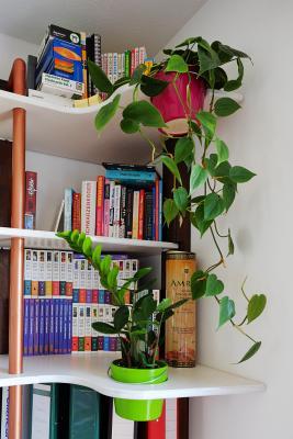 Bepflanzung des Regals