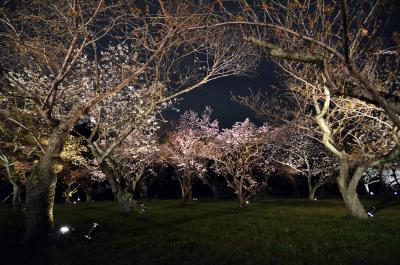 Nachbeleuchtung beim Schloss Nijo