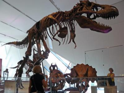 Der berüchtigte T-Rex